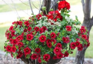 Φυτά φροντισμένα με αλκαλικό νερό Kangen.