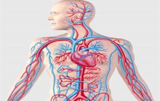 κυκλοφορία αίματος νερό και υγεία